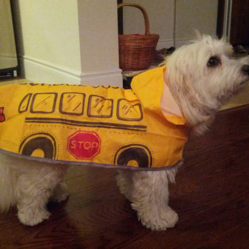 Halloween can be a traumatic time for your pets