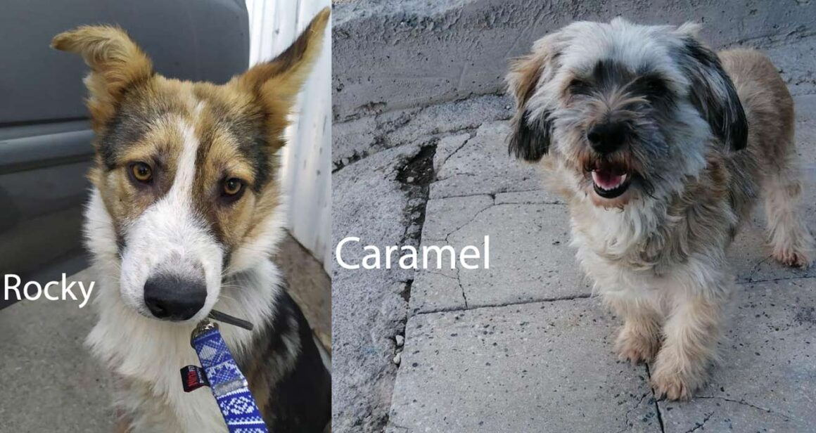 Caramel & Rocky's journey to Canada