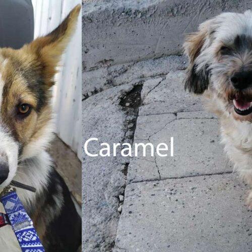 Caramel & Rocky's journey to Canada